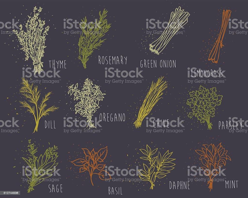 herbs set on dark background vector art illustration