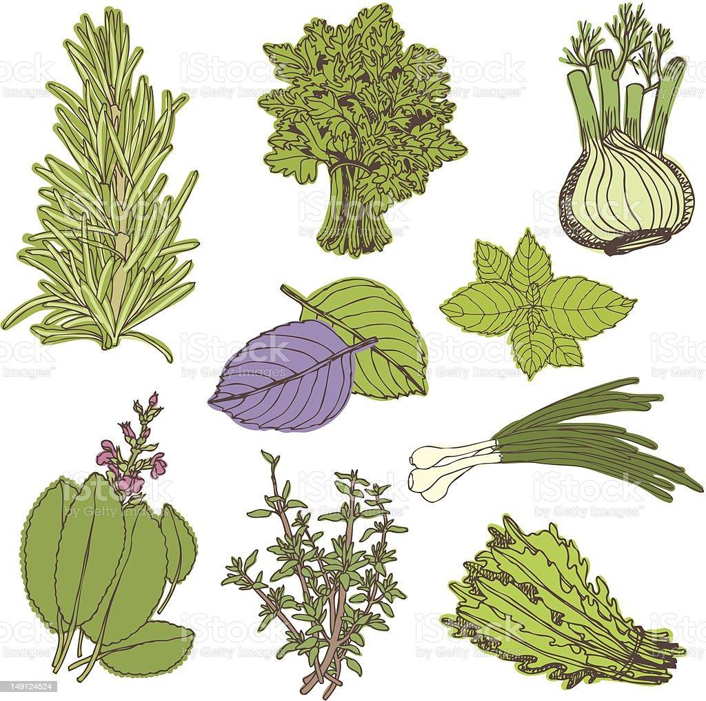Herbs set royalty-free stock vector art