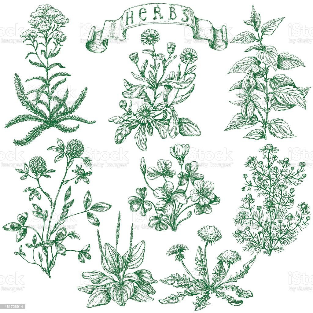 Herbs set vector art illustration