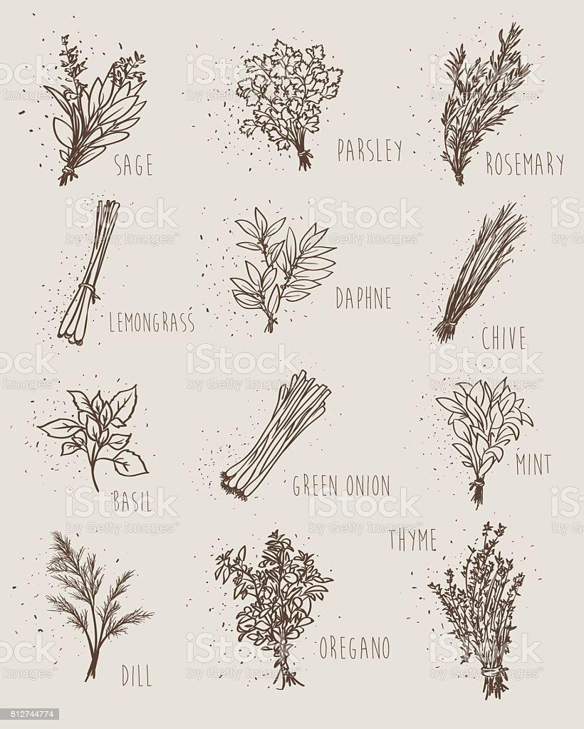 herbs set vector art illustration