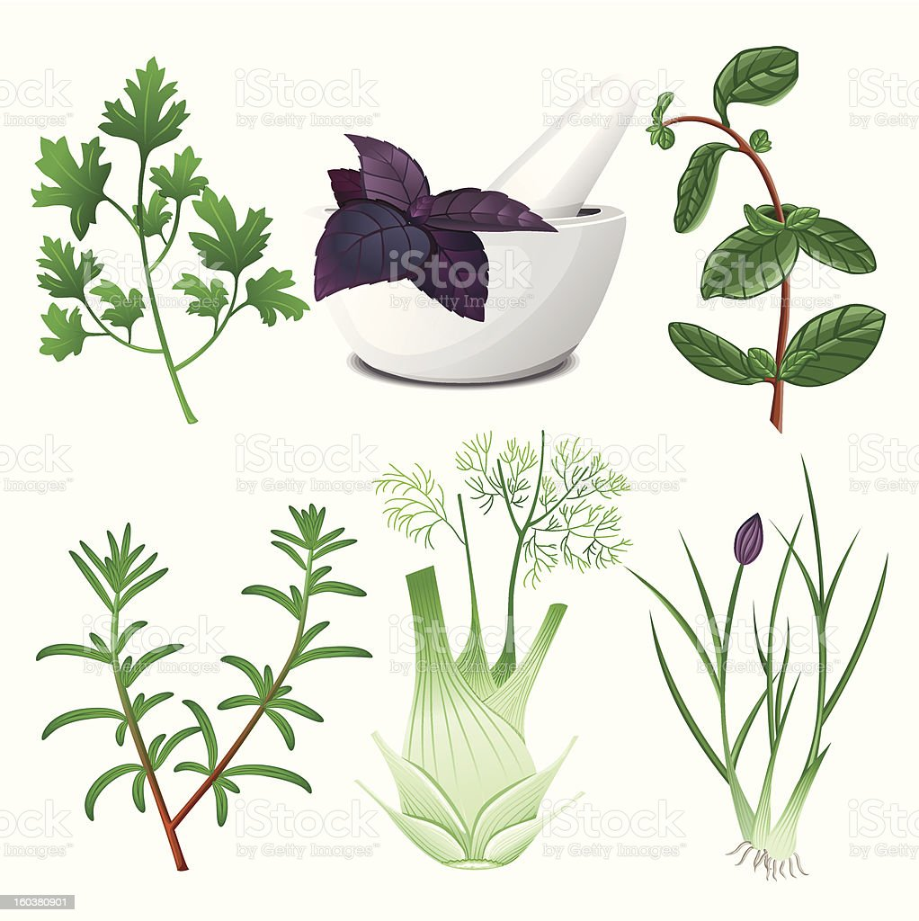Herbs set with the mortar royalty-free stock vector art