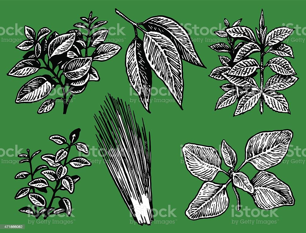 Herbs, Spices, Mint, Bay Leaves, Oregano, Thyme, Chives, Marjoram vector art illustration