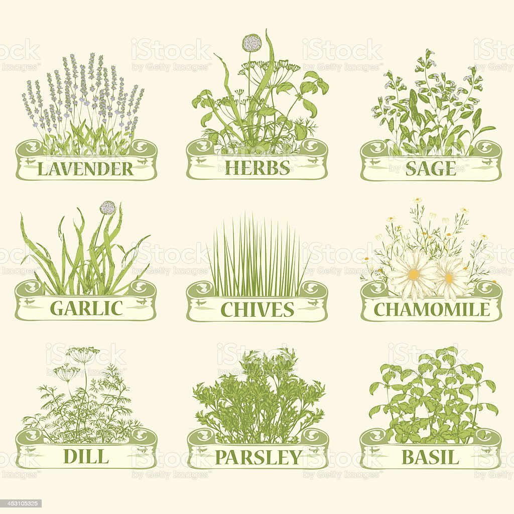 herbs, vector art illustration
