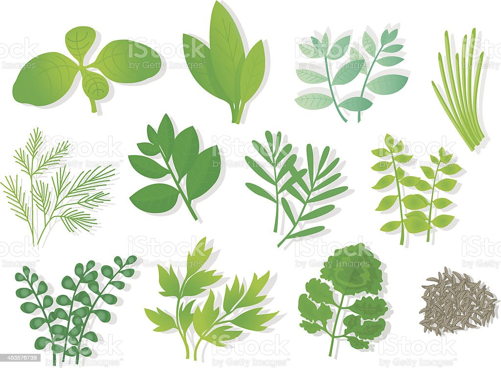 Herbs (12 Varios). vector art illustration