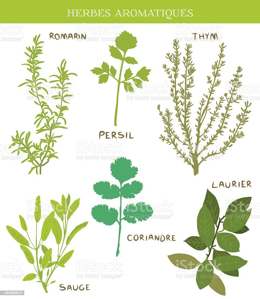 Herbes Aromatiques vector art illustration