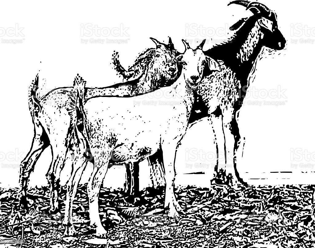 Herd Of Goats vector art illustration