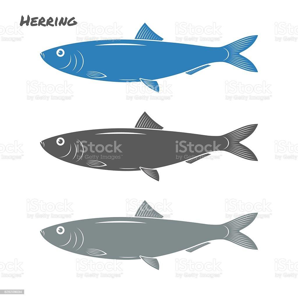 Herring fish vector illustration on white background vector art illustration