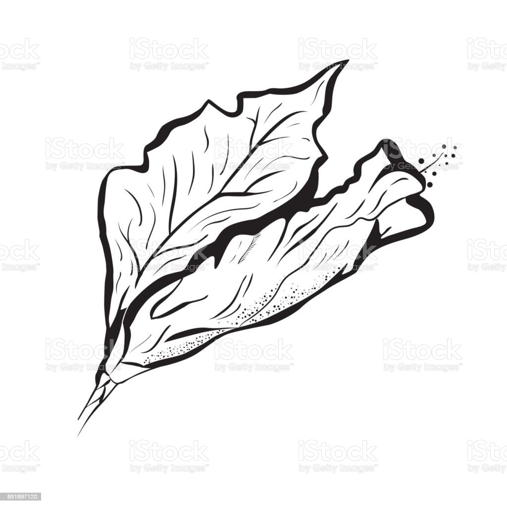 Hibiscus flower in tattoo style. Black and white, graphic tropical flower vector art illustration