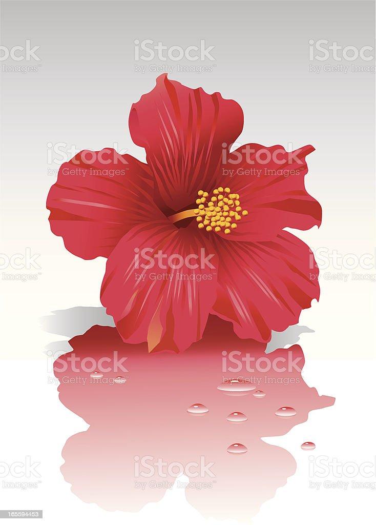Hibiscus Flower royalty-free stock vector art