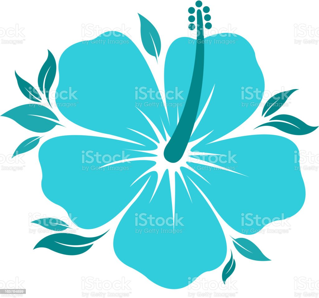hibiscus vector art illustration