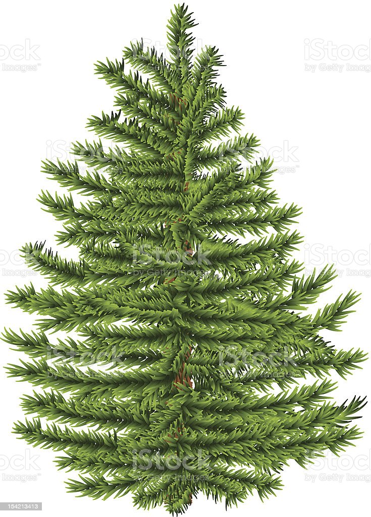 Highly detailed fir tree on white background. royalty-free stock vector art