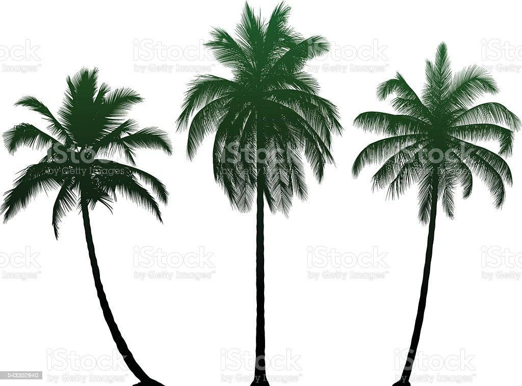 Highly Detailed Palm Trees vector art illustration