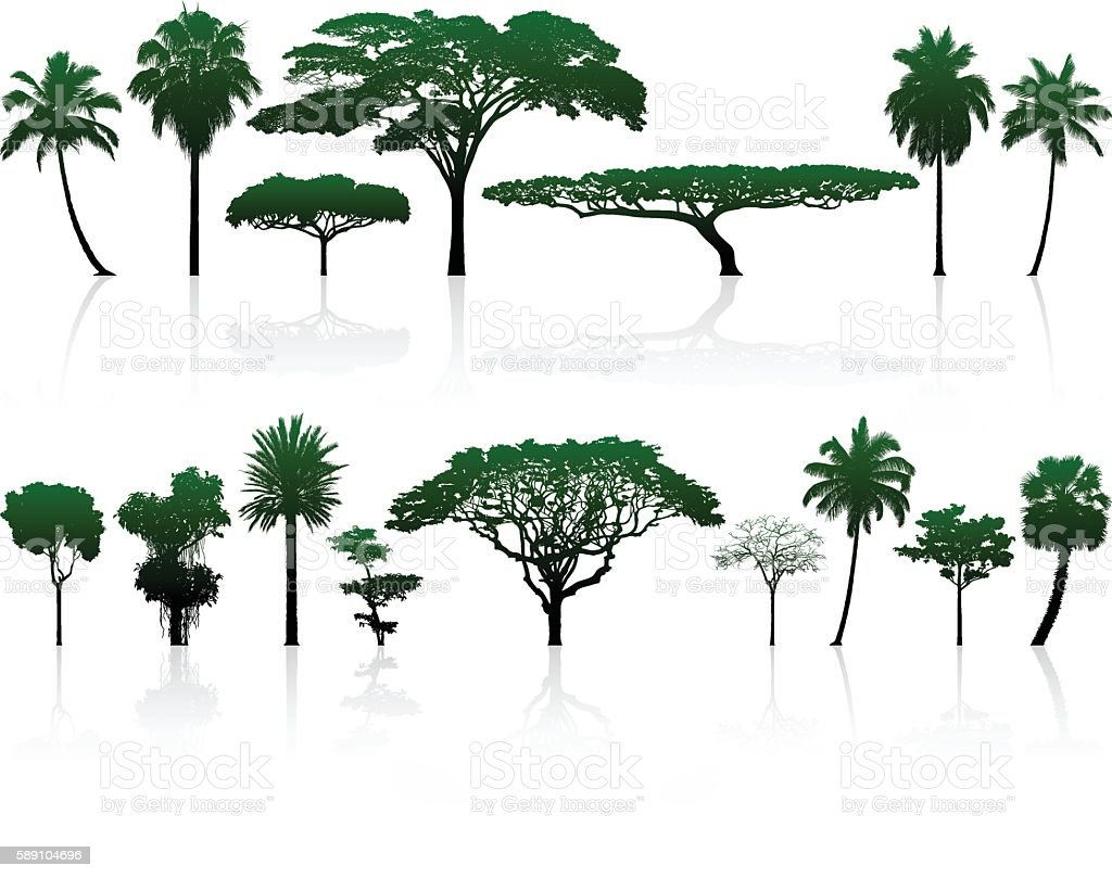 Highly Detailed Trees vector art illustration