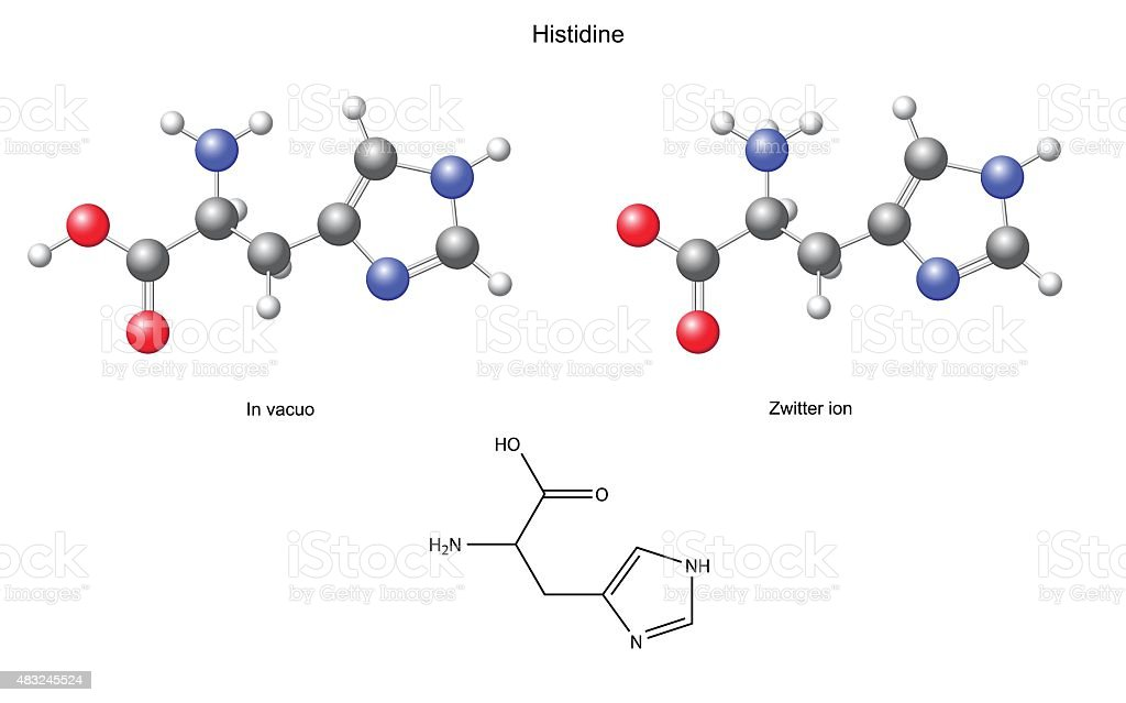 Histidine (His) - chemical structural formula and models vector art illustration
