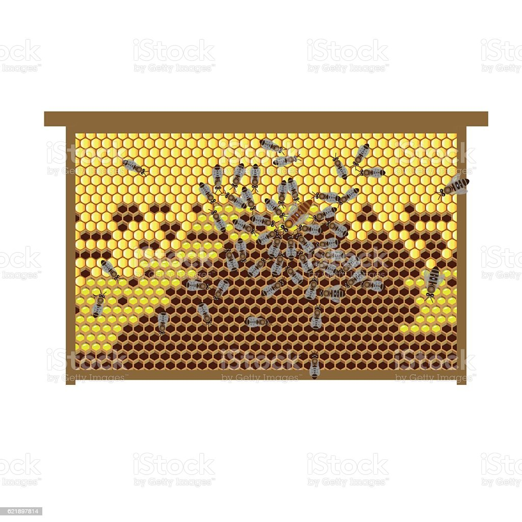 Hive frame with bees vector art illustration
