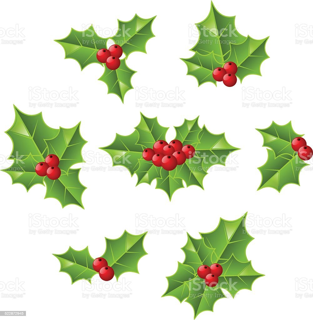 Holly berry on white background vector art illustration
