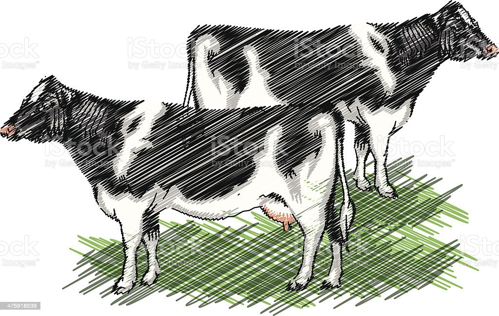 Holstein cow illustration vector art illustration