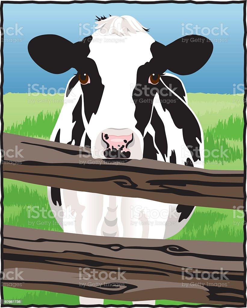 Holstein Cow vector art illustration