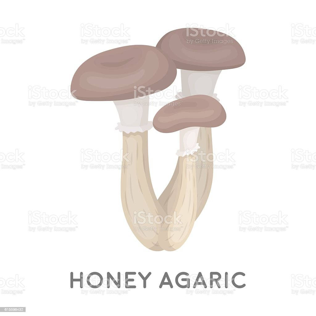 Honey agaric icon in cartoon style isolated on white background. vector art illustration