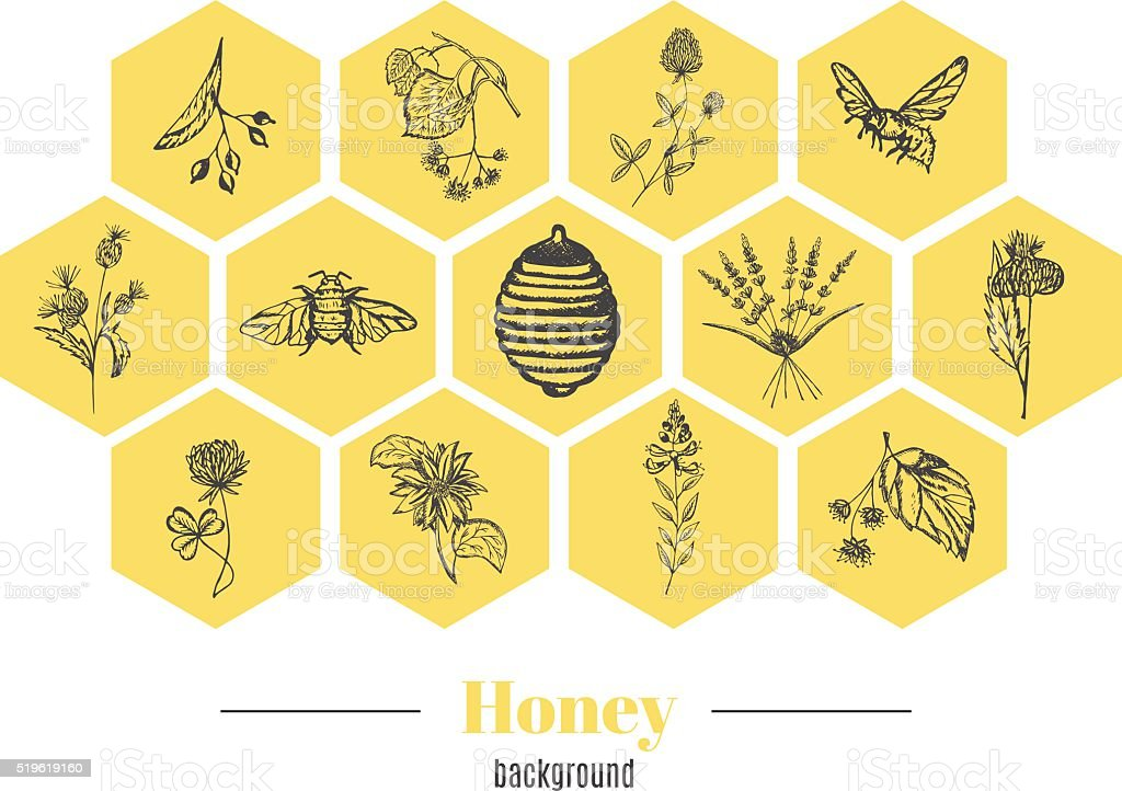 Honey background vector art illustration