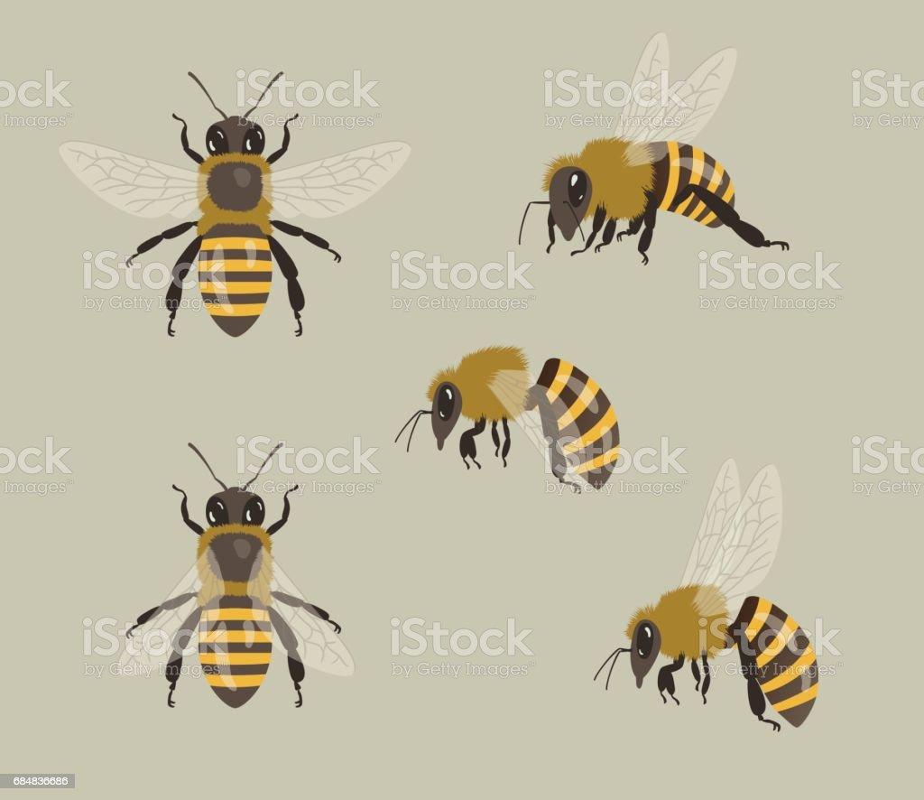 Honey Bees, different views vector art illustration