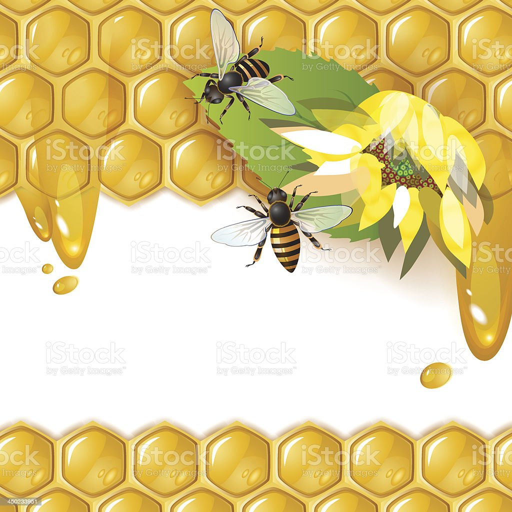Honey bees on honeycomb royalty-free stock vector art
