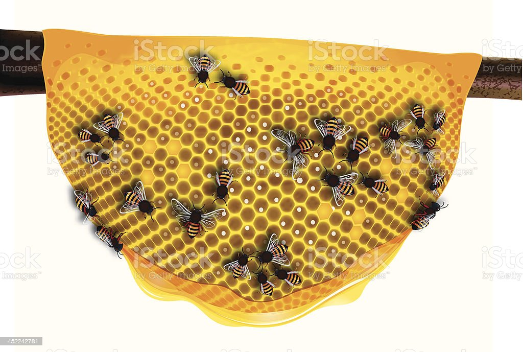 Honey Comb royalty-free stock vector art