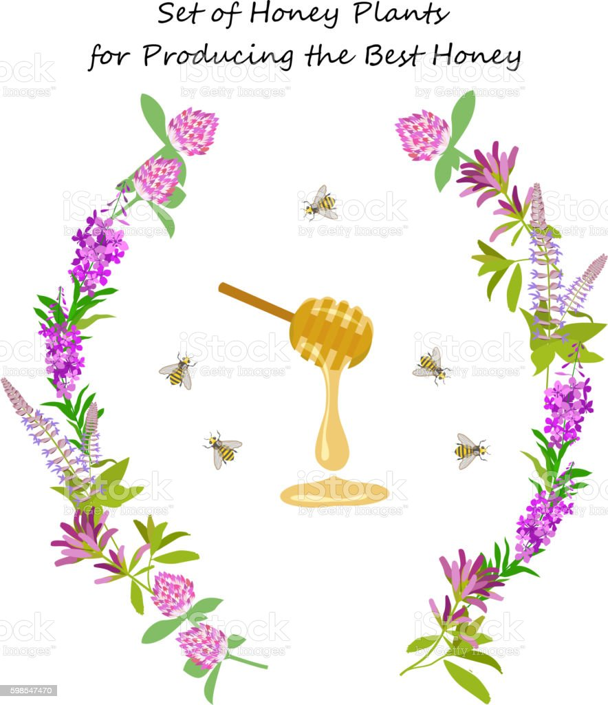 Honey plant set vector art illustration