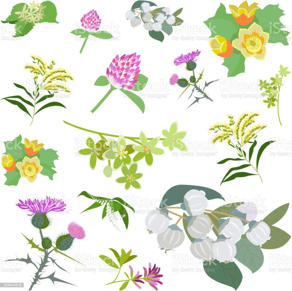 Honey planty set for produsing the best honey vector art illustration