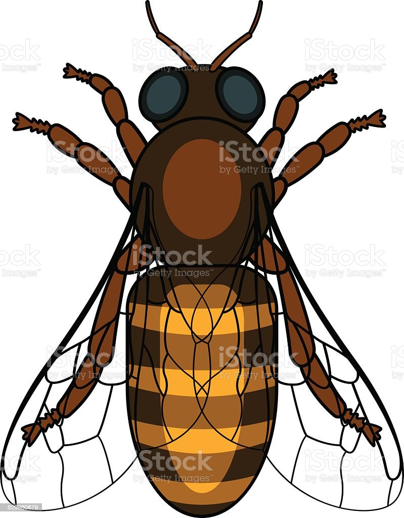 Honeybee vector art illustration