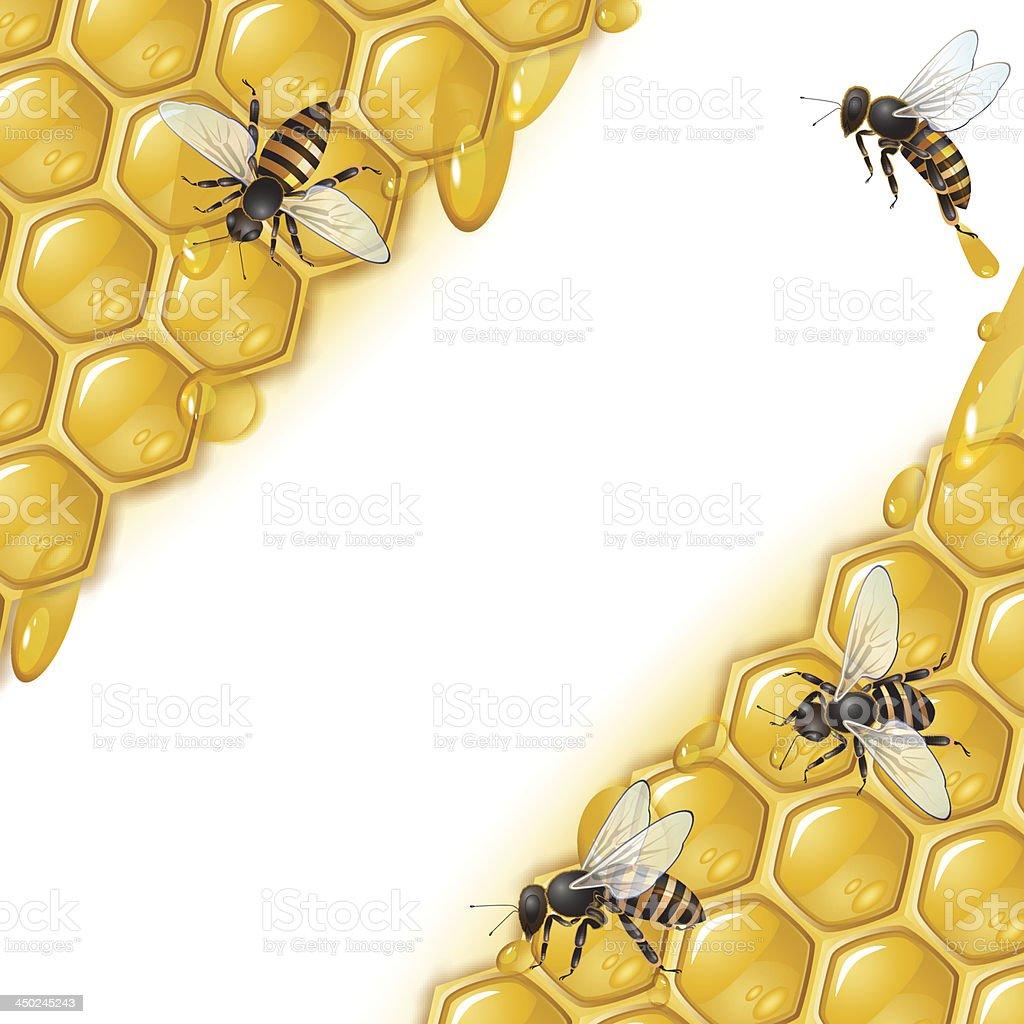 Honeycomb bees royalty-free stock vector art
