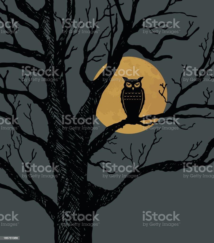 Hoot of a Night vector art illustration