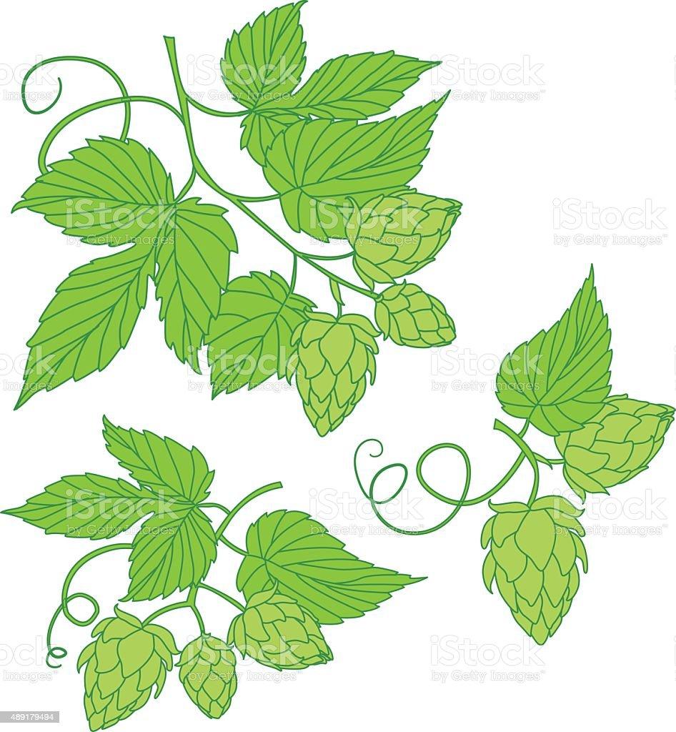 Hops vector illustration icon or logo vector art illustration
