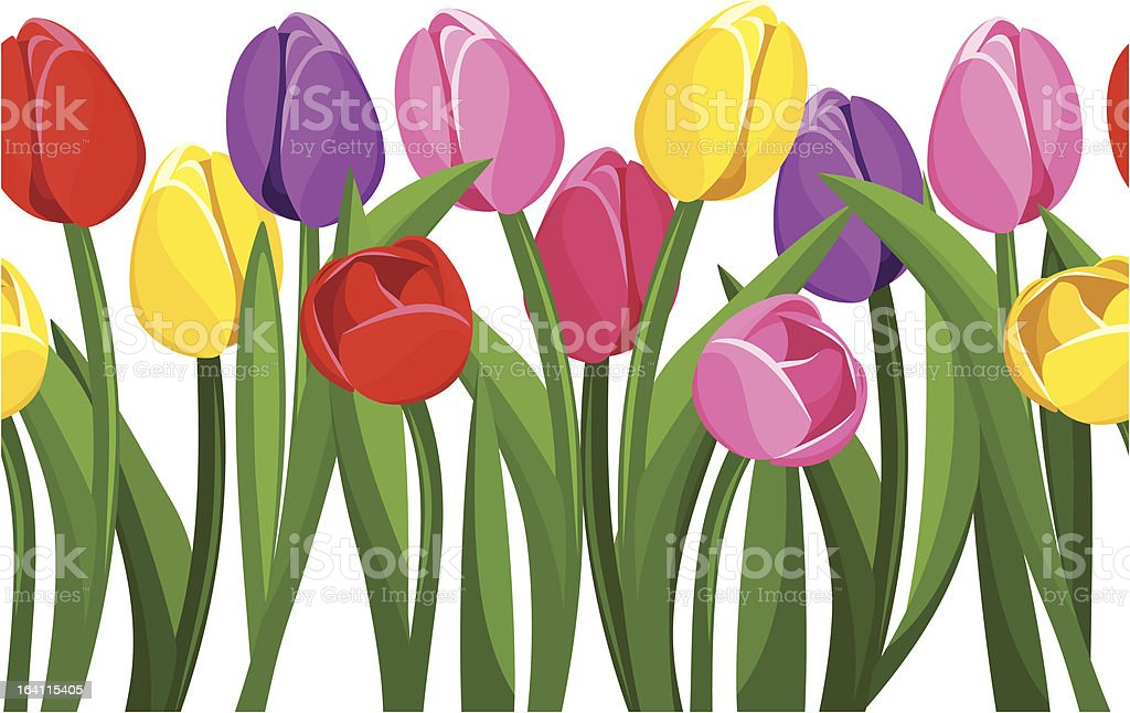 Horizontal seamless background with colored tulips. Vector illustration. vector art illustration