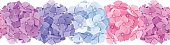 Horizontal seamless background with pink, blue and purple hydrangea flowers.