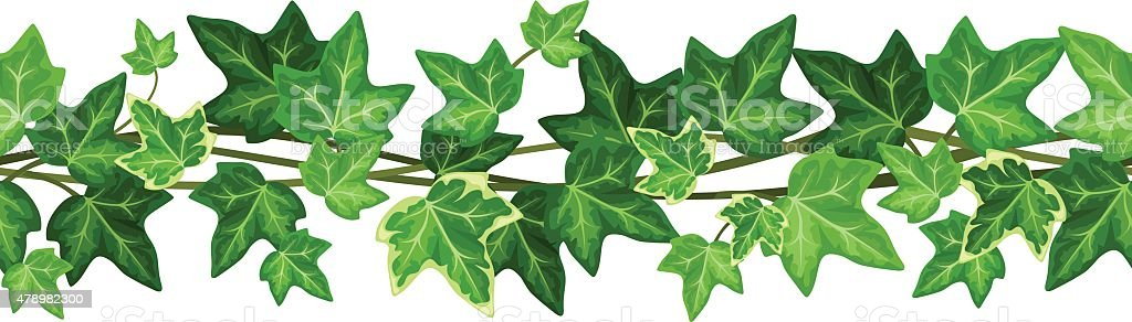 Horizontal seamless garland with ivy leaves. Vector illustration. vector art illustration