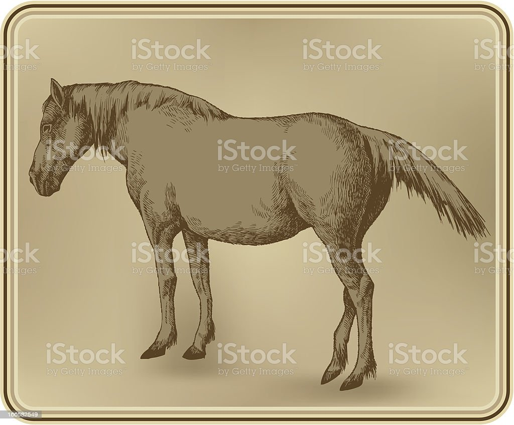 Horse, hand-drawing. Vector illustration. royalty-free stock vector art