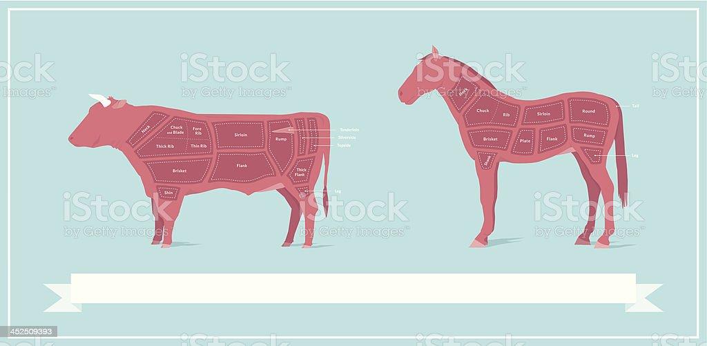Horse Meat & Beef Comparison Diagram vector art illustration