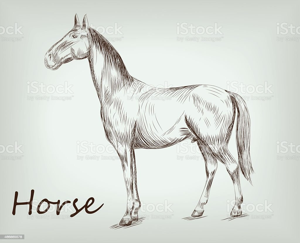 horse posing in a standing position vector sketch on  background vector art illustration