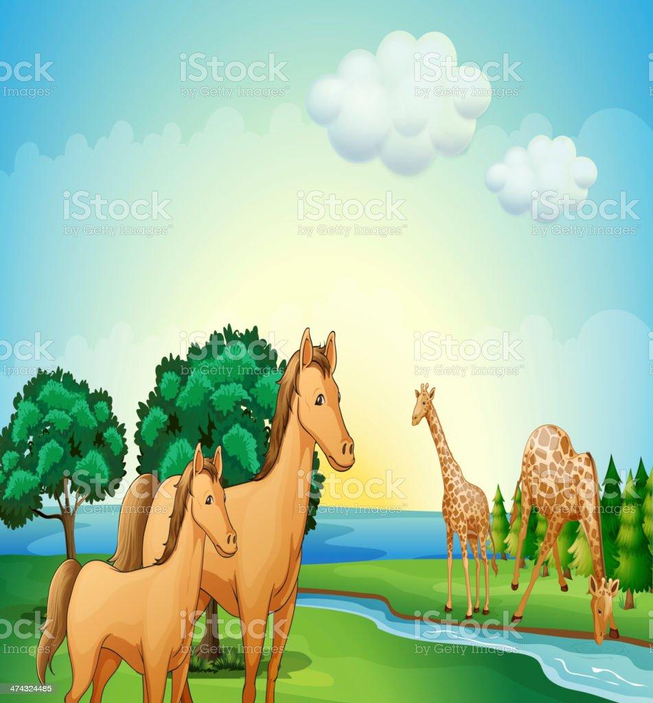 Horses and giraffe near the river royalty-free stock vector art