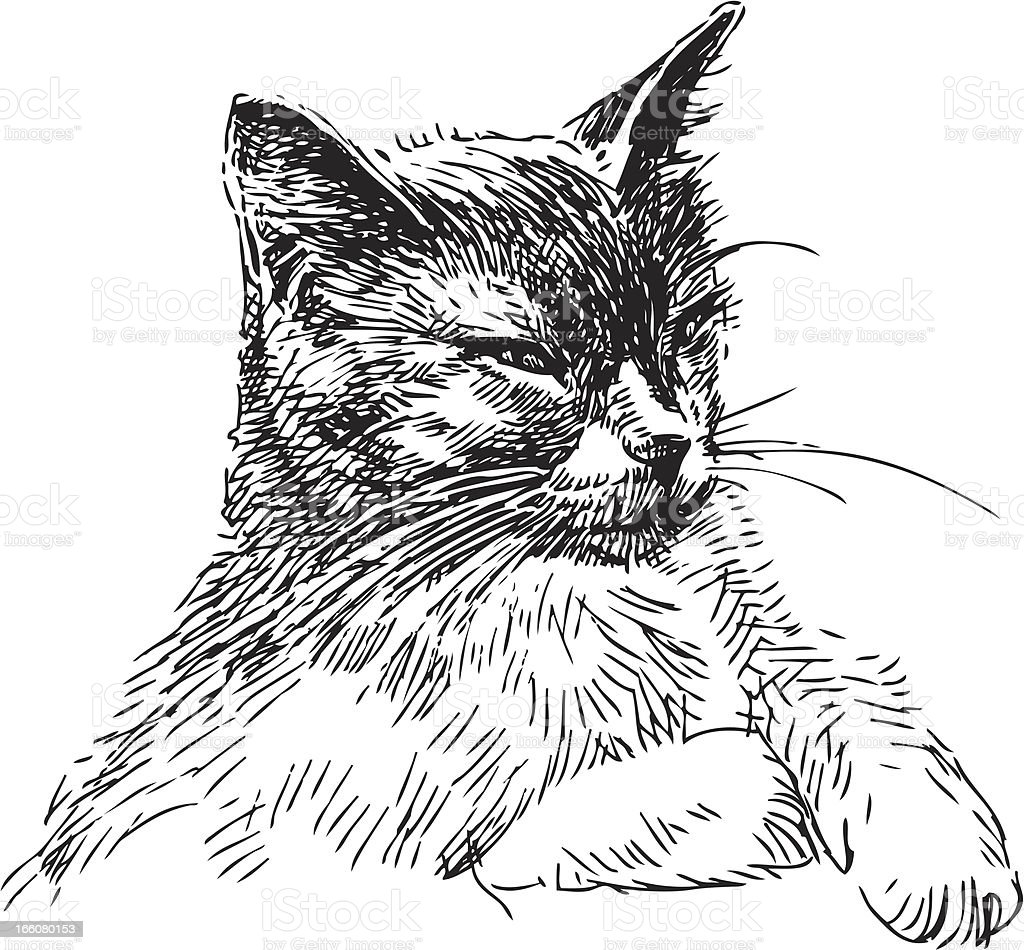 house cat vector art illustration