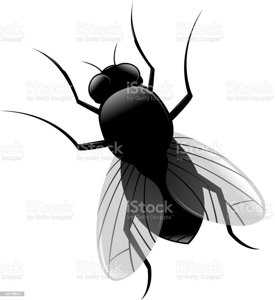 housefly royalty-free stock vector art