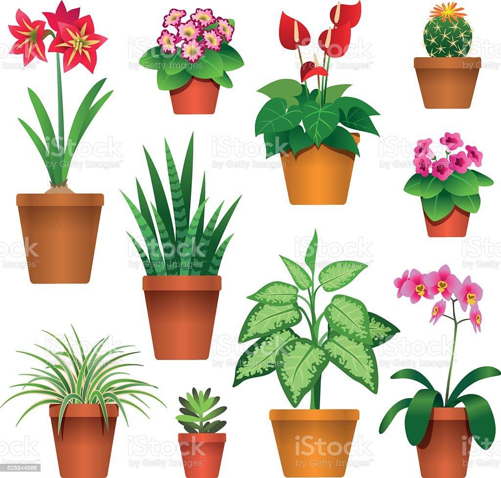 houseplants vector art illustration