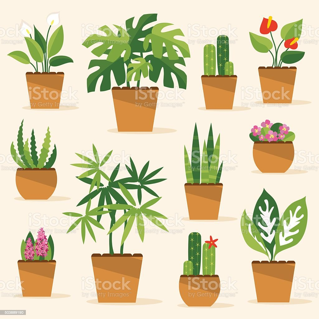 Houseplants. Vector Illustration vector art illustration