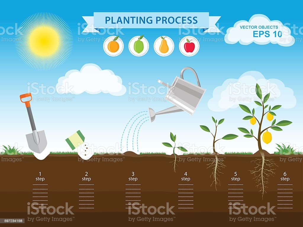 How to grow tree from the seed in the garden vector art illustration