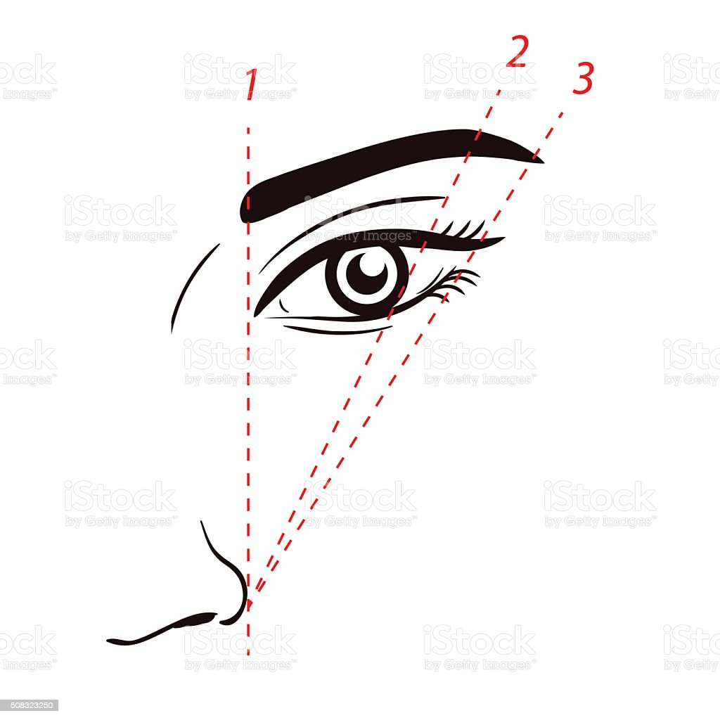 How to paint the eyebrows. How to shape the eyebrow on face vector art illustration