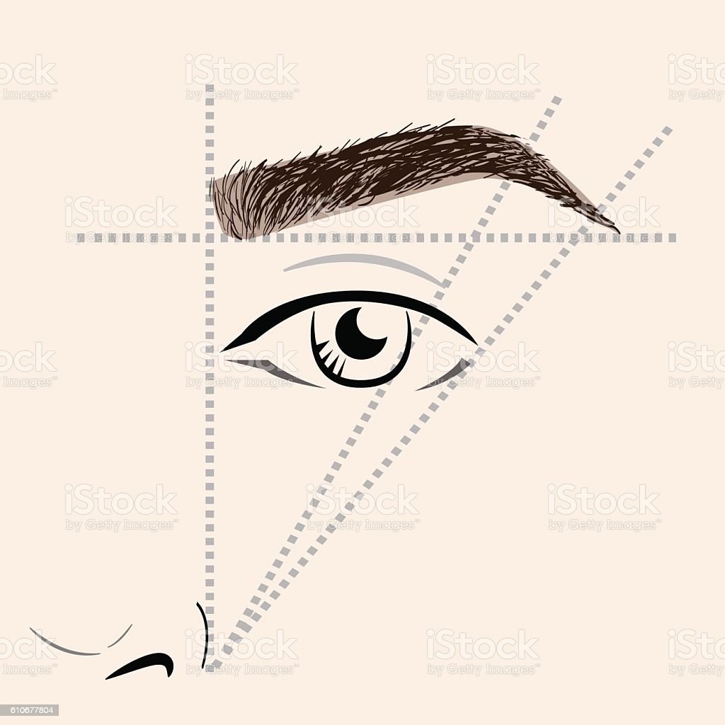 How to paint the eyebrows vector art illustration