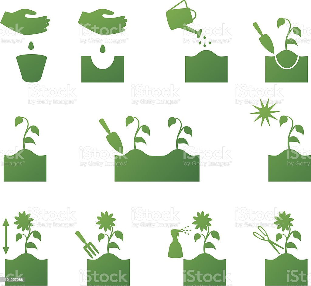 How to put flowers vector art illustration