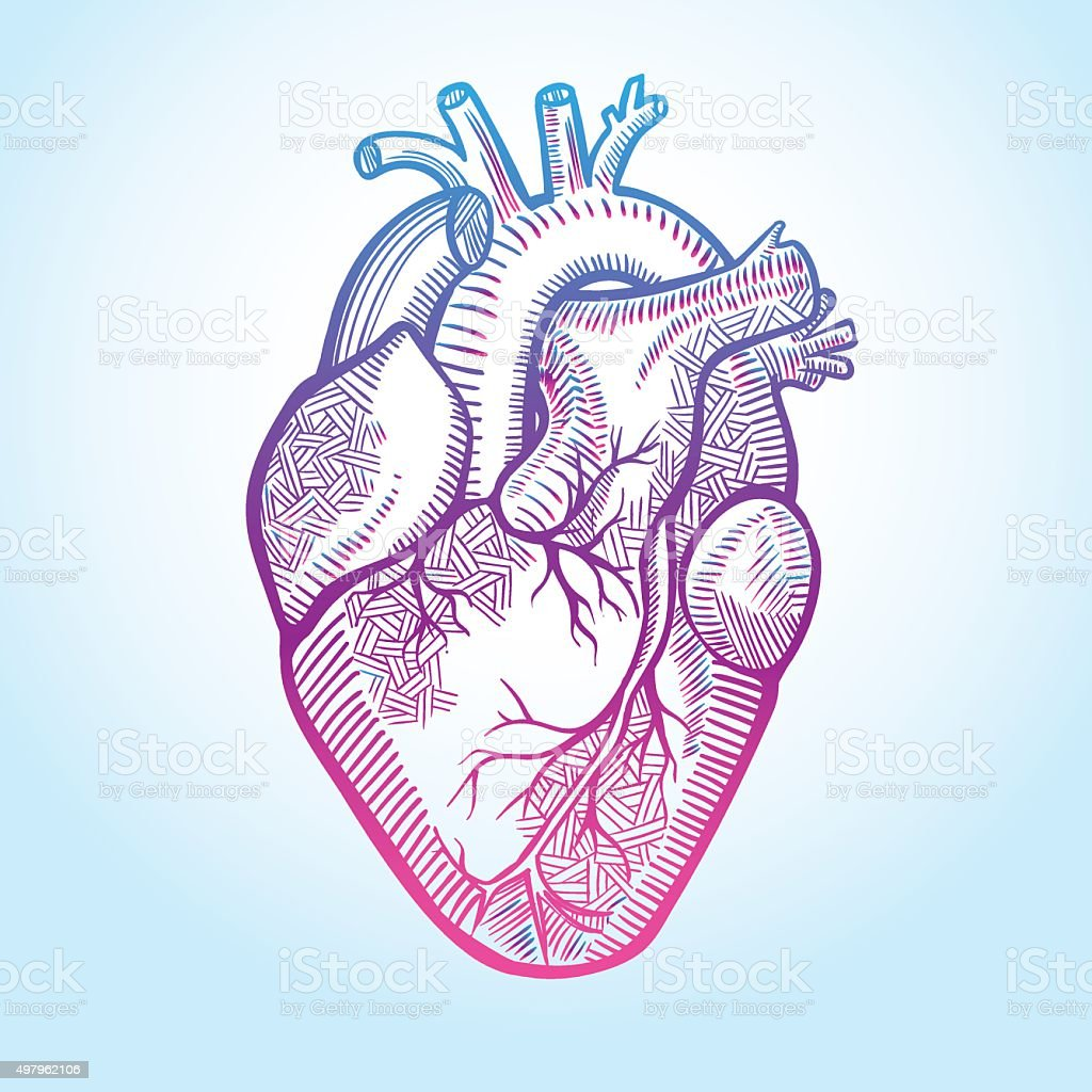 Heart Line Art Design : Human anatomical heart made in graphic art as laconic logo