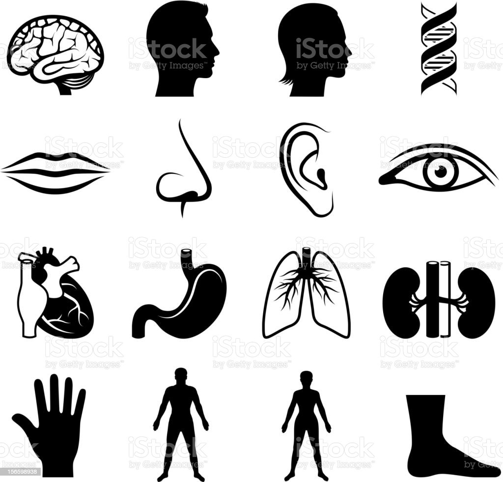 human anatomy and senses black & white vector icon set vector art illustration